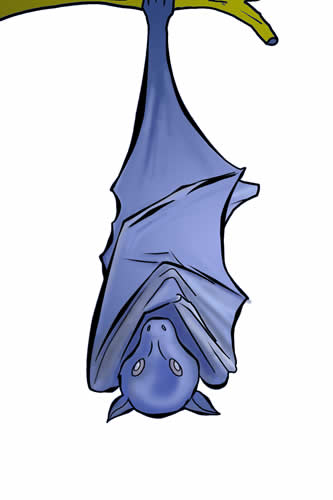 333x500 Learn About Nature Free Bat Clip Art