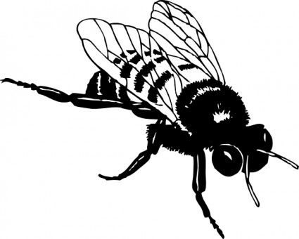 425x340 Best Bee Clipart Black And White