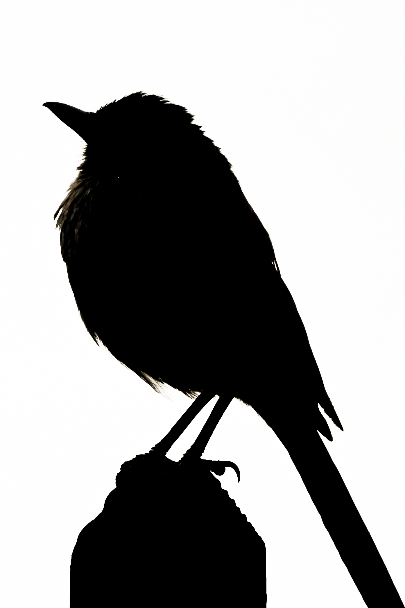 1394x2091 Songbird Clipart Bird Silhouette
