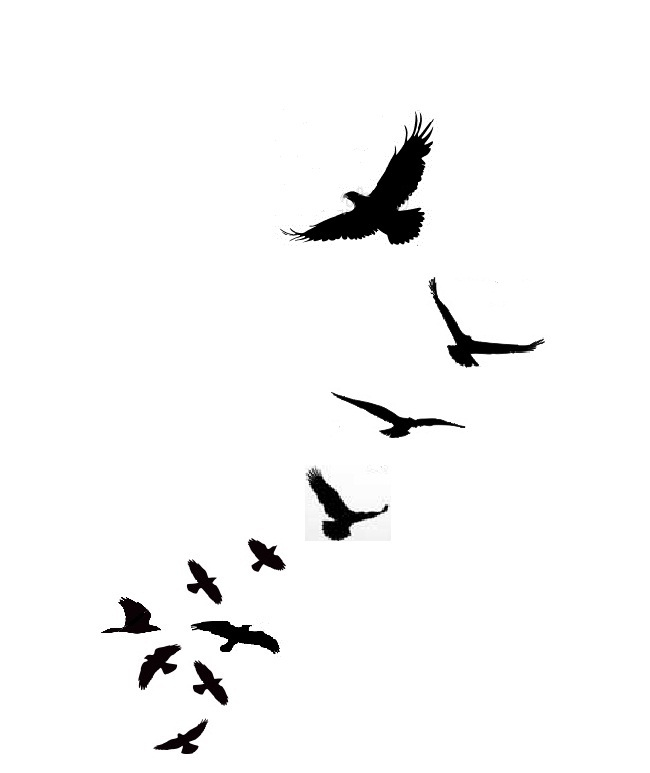 650x773 Bird Silhouette Transparent Clipart