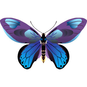 300x300 Butterfly Clipart Free