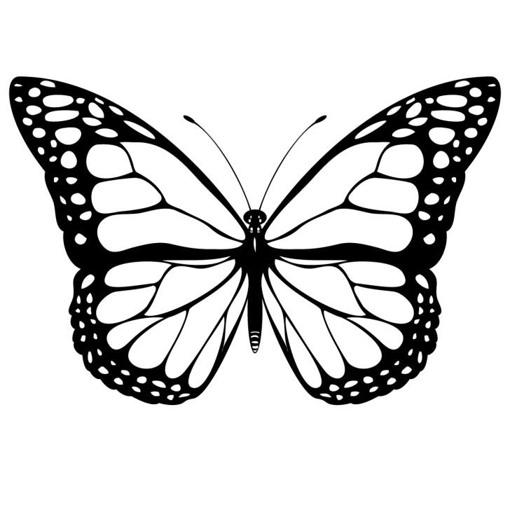 728x728 Free Butterfly Clip Art