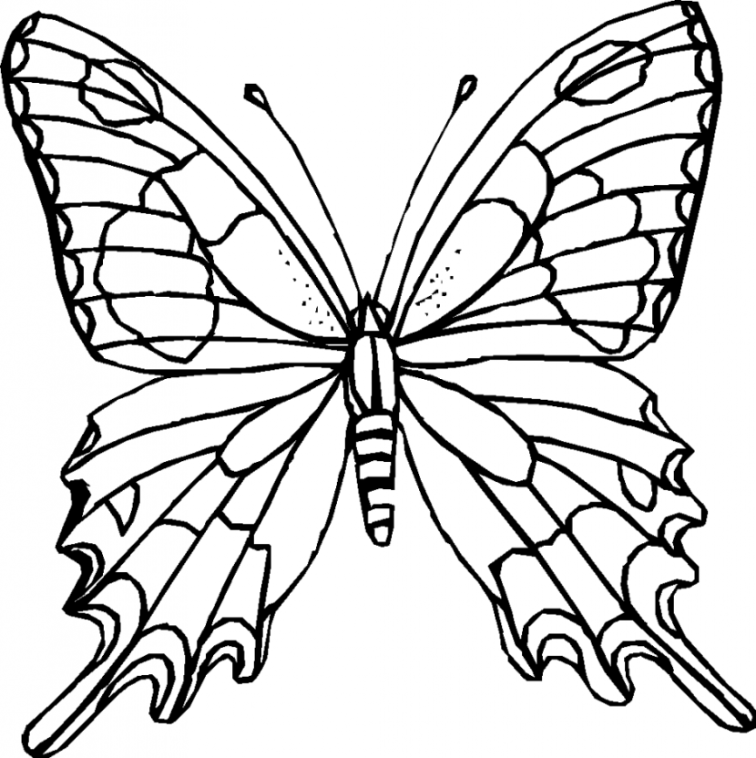 830x832 Butterfly Clip Art Black And White