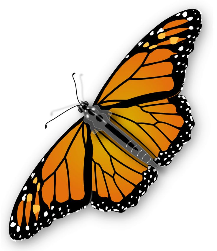 Free Butterfly Clipart Pictures