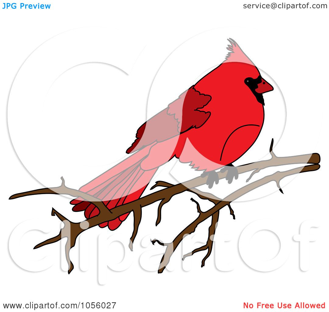 1080x1024 Royalty Free Vector Clip Art Illustration Of A Red Cardinal