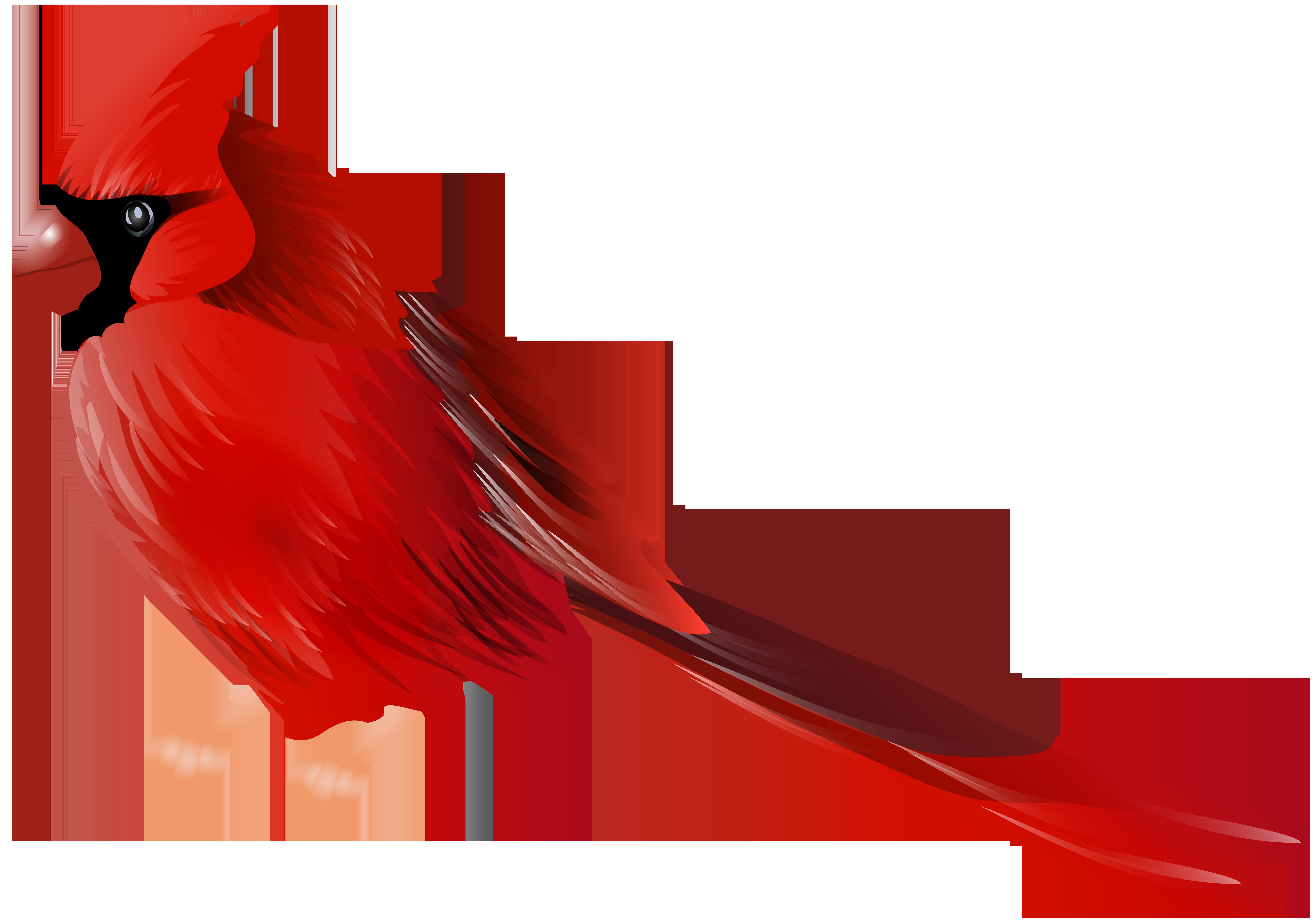 8000x5623 Cardinal Bird Png Clip Artu200b Gallery Yopriceville