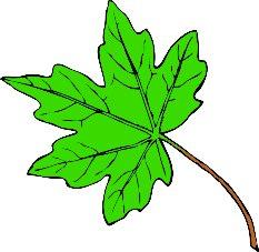 233x227 Free Clip Art Leaves