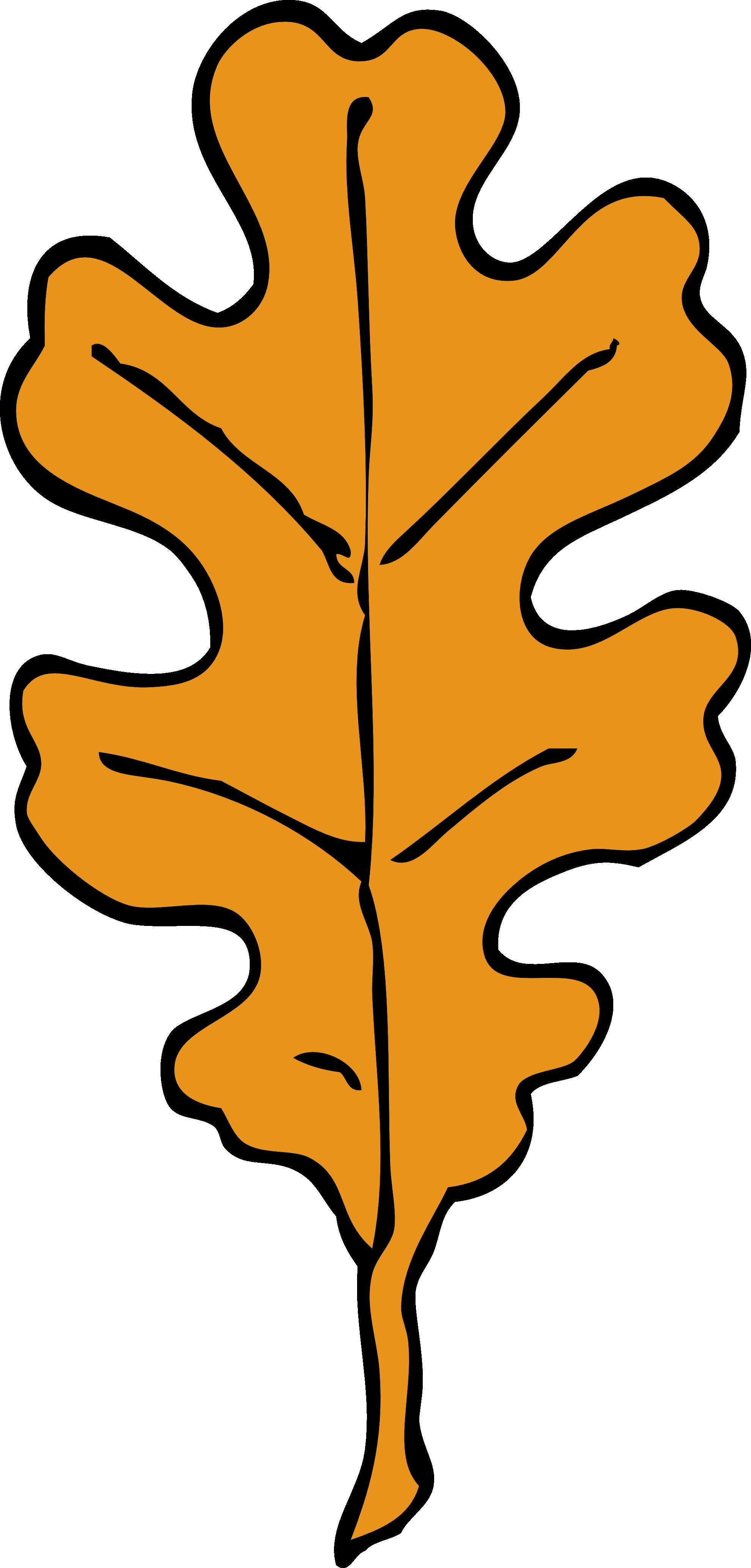 1979x4132 Fall Clipart Oak Leaves