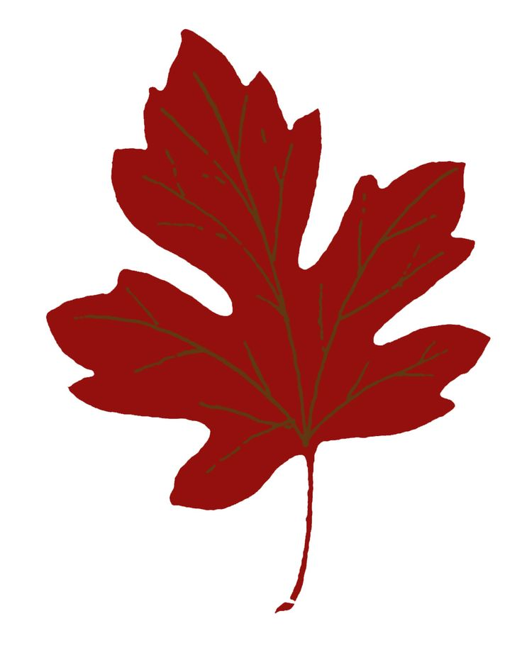 736x931 Best Maple Leaf Clipart Ideas Maple Leaf
