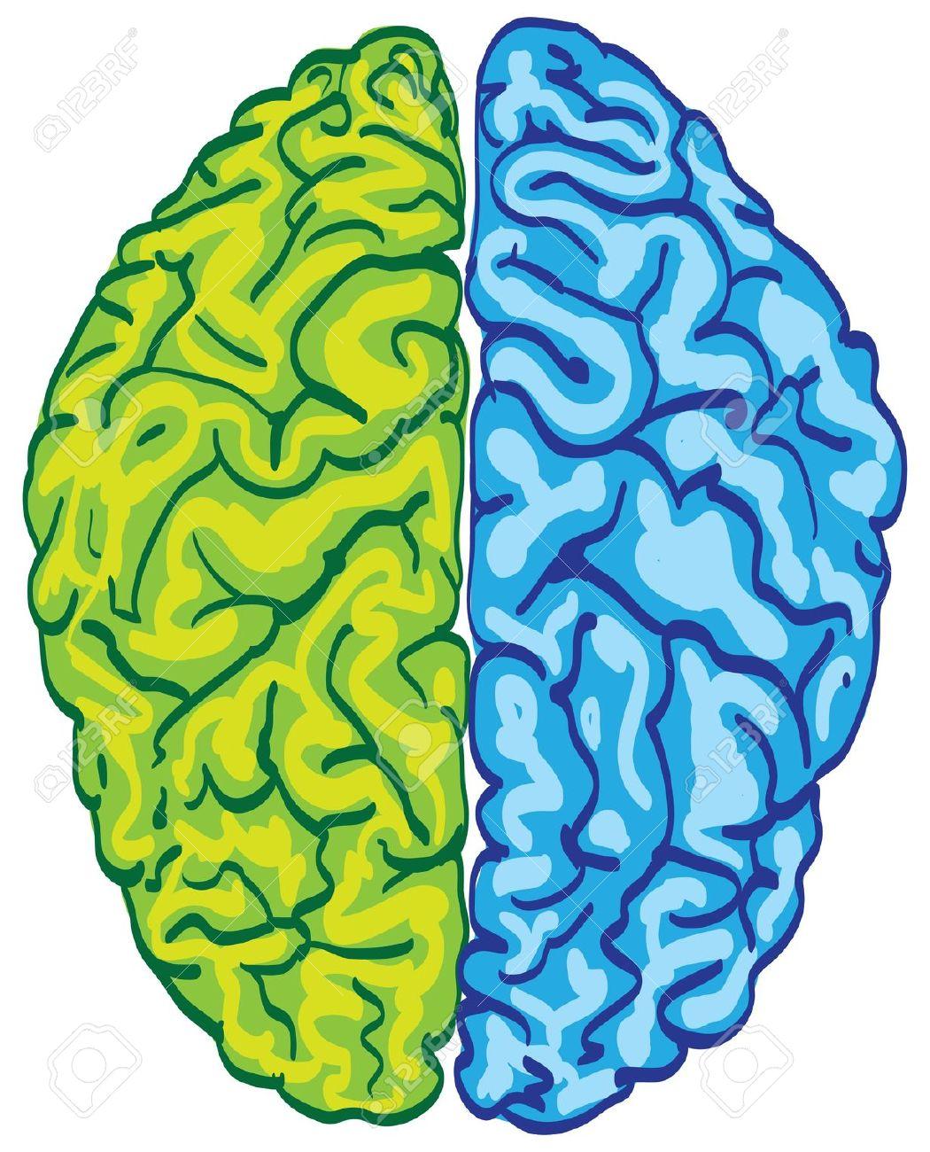 Free Clipart Brain