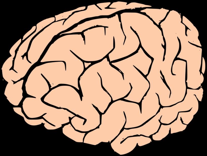 820x619 Brain Clipart No Background Brain Clipart No Background Free Clip