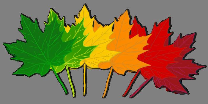 700x352 Fall Leaves Clip Art