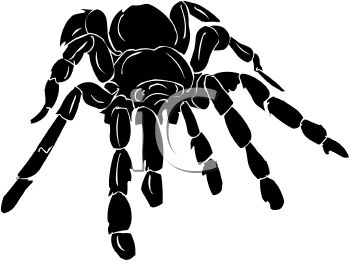 350x261 Picture Of A Black Spider On A White Background In A Vector Clip