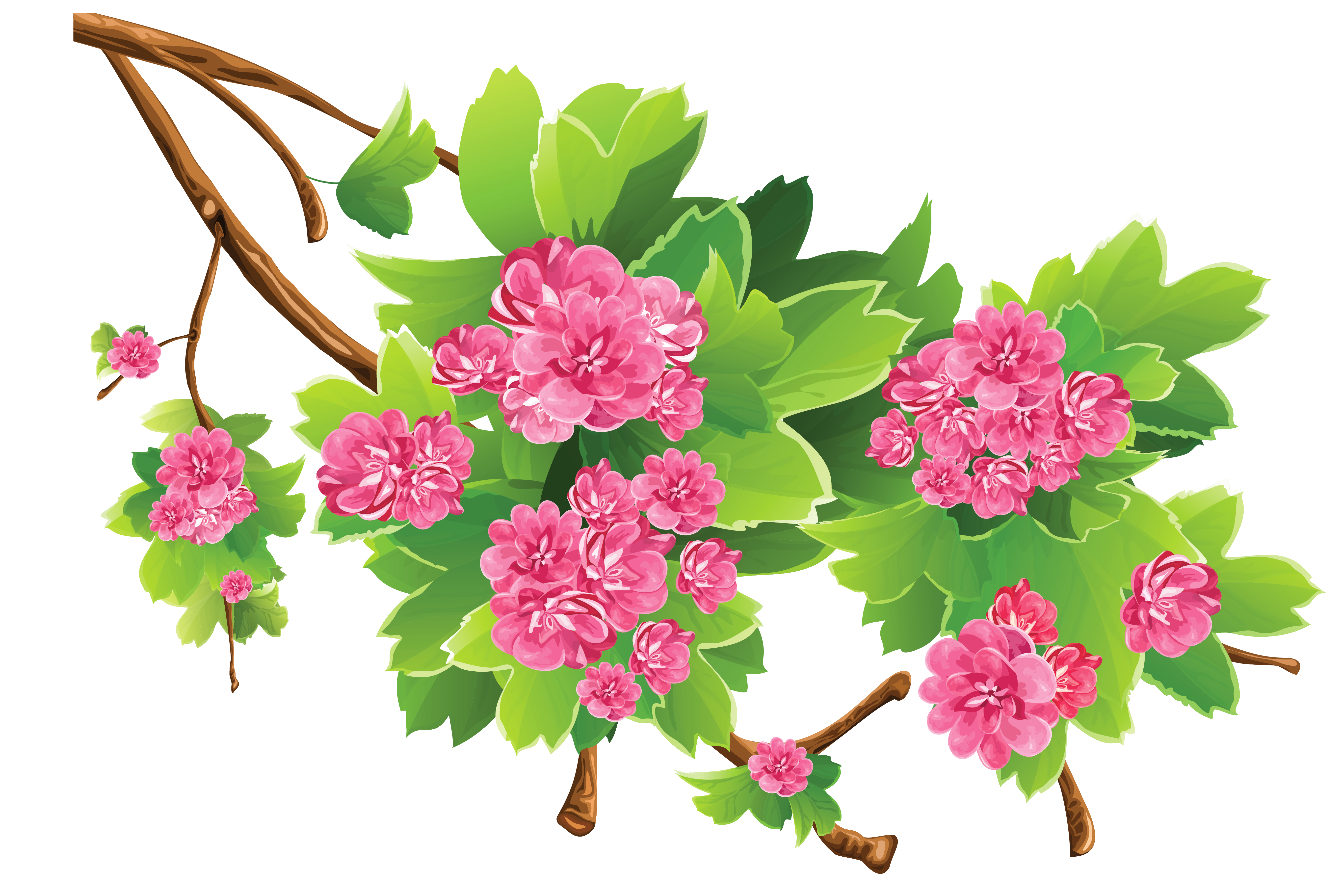 Free Clipart With Transparent Background | Free download ...