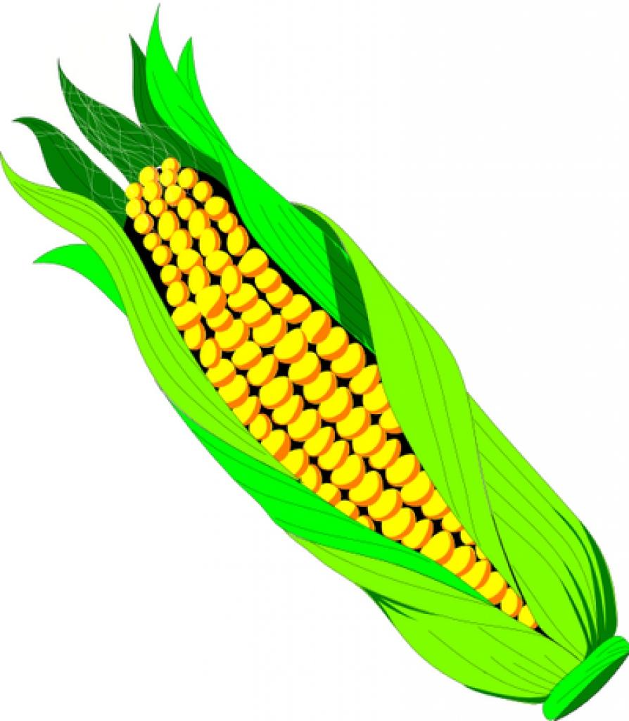 894x1024 Clipart Ear Of Corn Clipart Ear Of Corn Ear Of Sweet White Corn