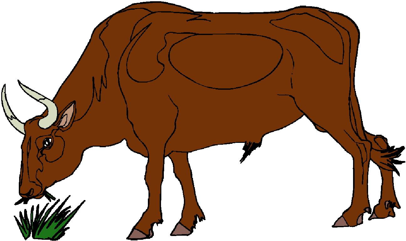 1296x771 Bulls Clipart Brown Cow