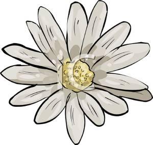 300x285 Daisy Flower