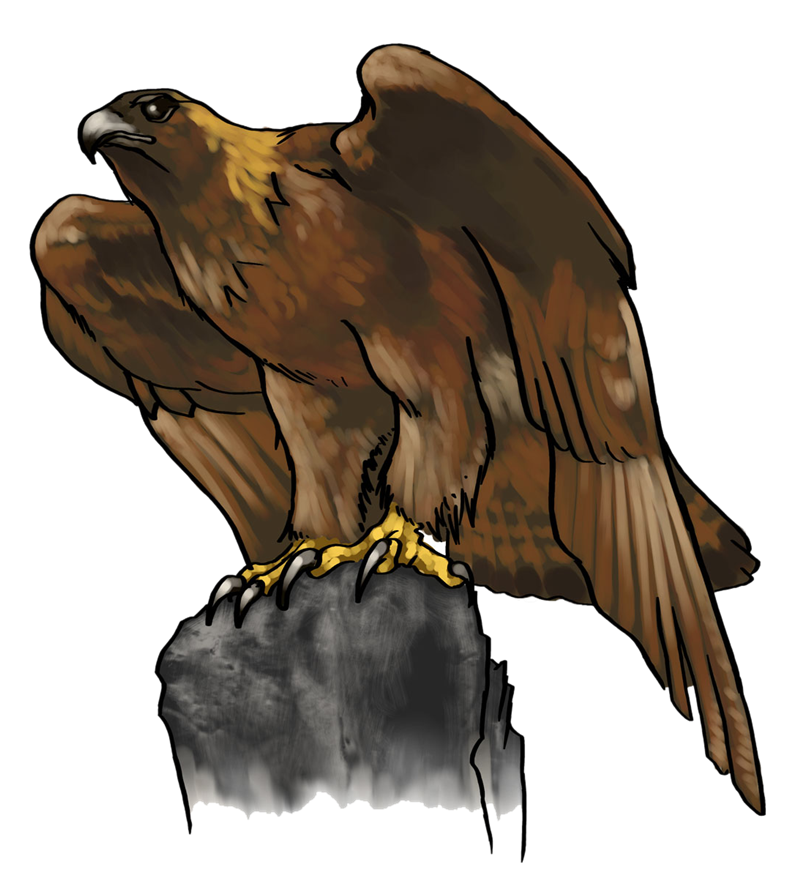 800x886 Golden Eagle Clipart