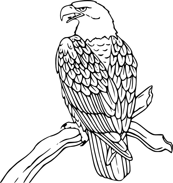 564x597 Top 83 Bald Eagle Clip Art