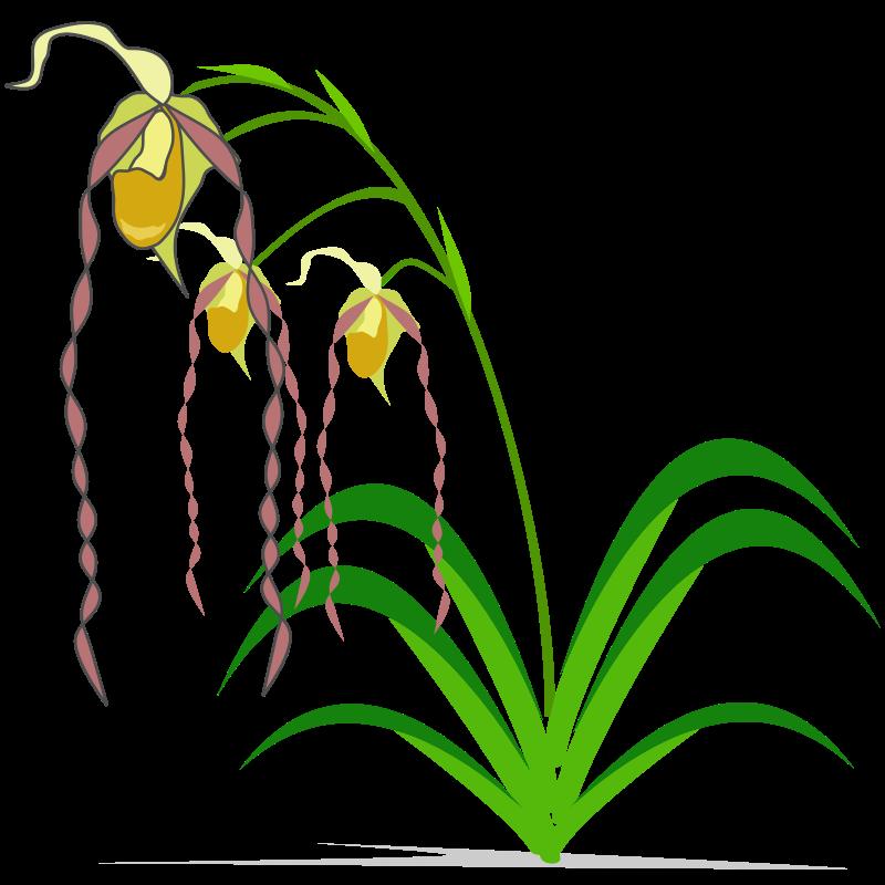 800x800 Sad Orchid Clipart