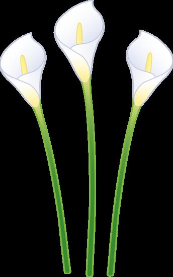 344x550 Three White Calla Lilies