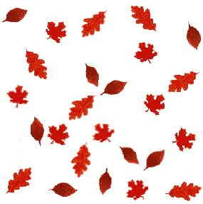 Free Fall Leaf