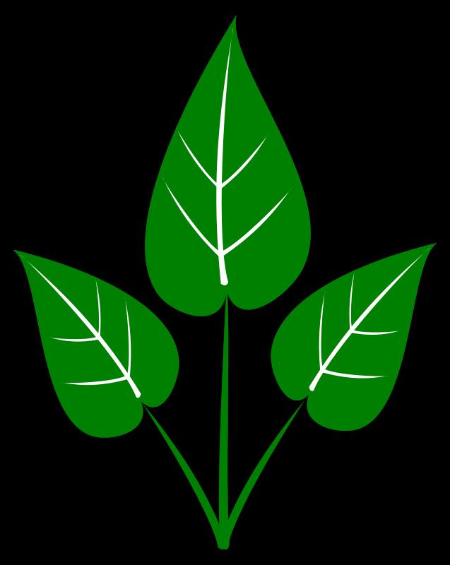 637x800 Leaf Clipart Green Leaf