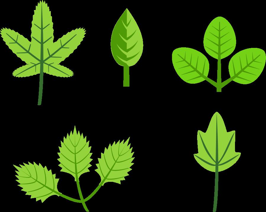 900x717 Leaves Leaf Clip Art Images Free Clipart Images Clipartix 3