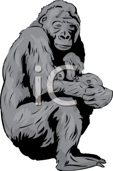 231x350 Picture Of A Mother Gorilla Nursing Her Baby In A Vector Clip Art