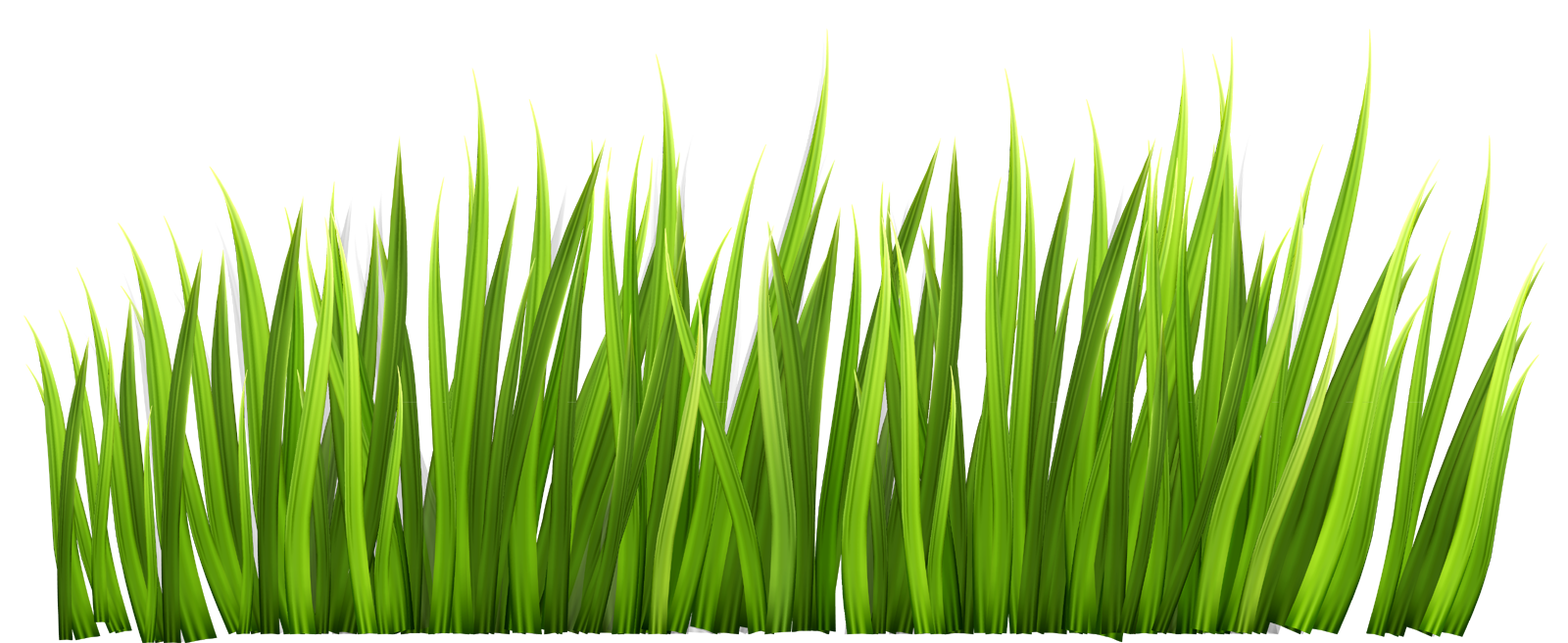 1600x656 Grass Transparent Background Grass Png Images Download Grass