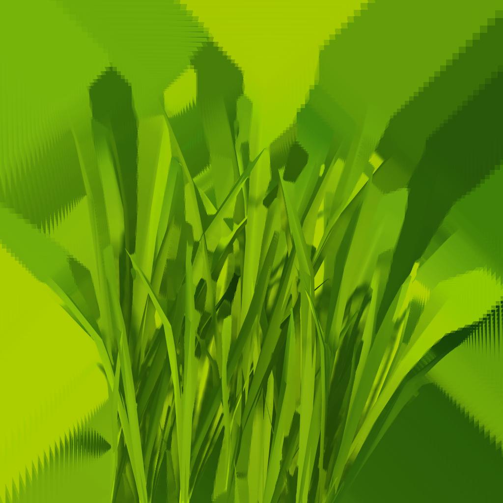 1024x1024 Sea Grass Clipart Blades Grass