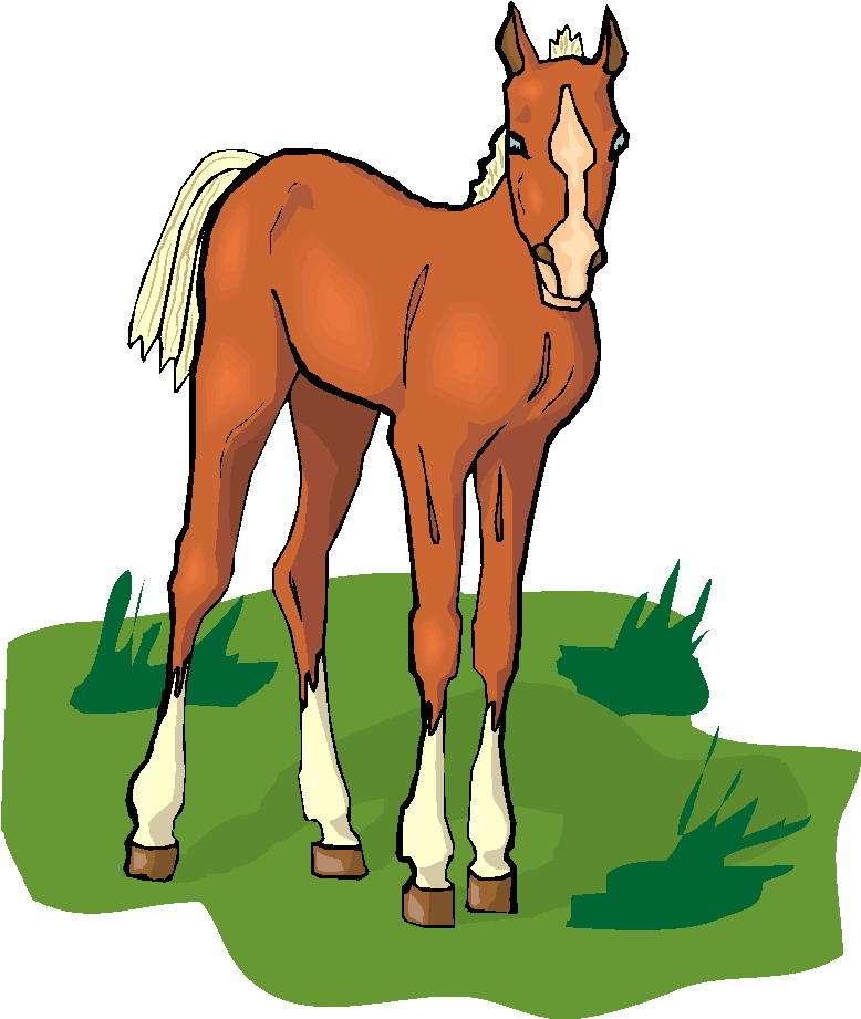 778x921 Graphics For Baby Horse Clip Art Graphics