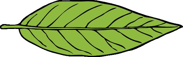 600x187 Lanceolate Leaf Clip Art Free Vector 4vector