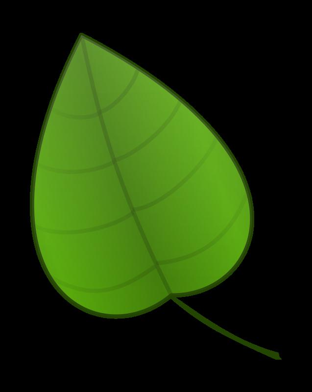 637x800 Top 75 Leaf Clip Art