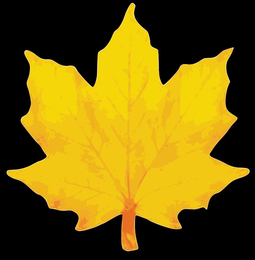 884x900 Top 88 Autumn Leaves Clip Art