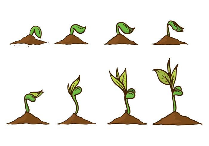 700x490 Free Grow Up Plant Vector
