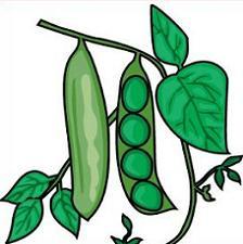 224x225 Free Pea Plant Clipart