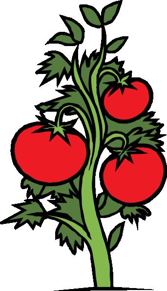 342x594 Tomato Plant Clip Art Free Vector 4vector