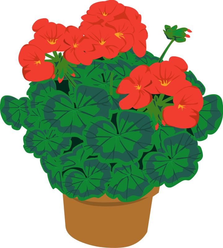720x800 Flower Potted Plant Clipart