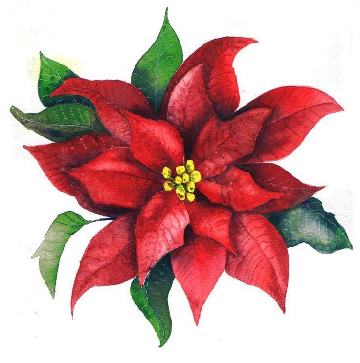 Free Poinsettia Clipart