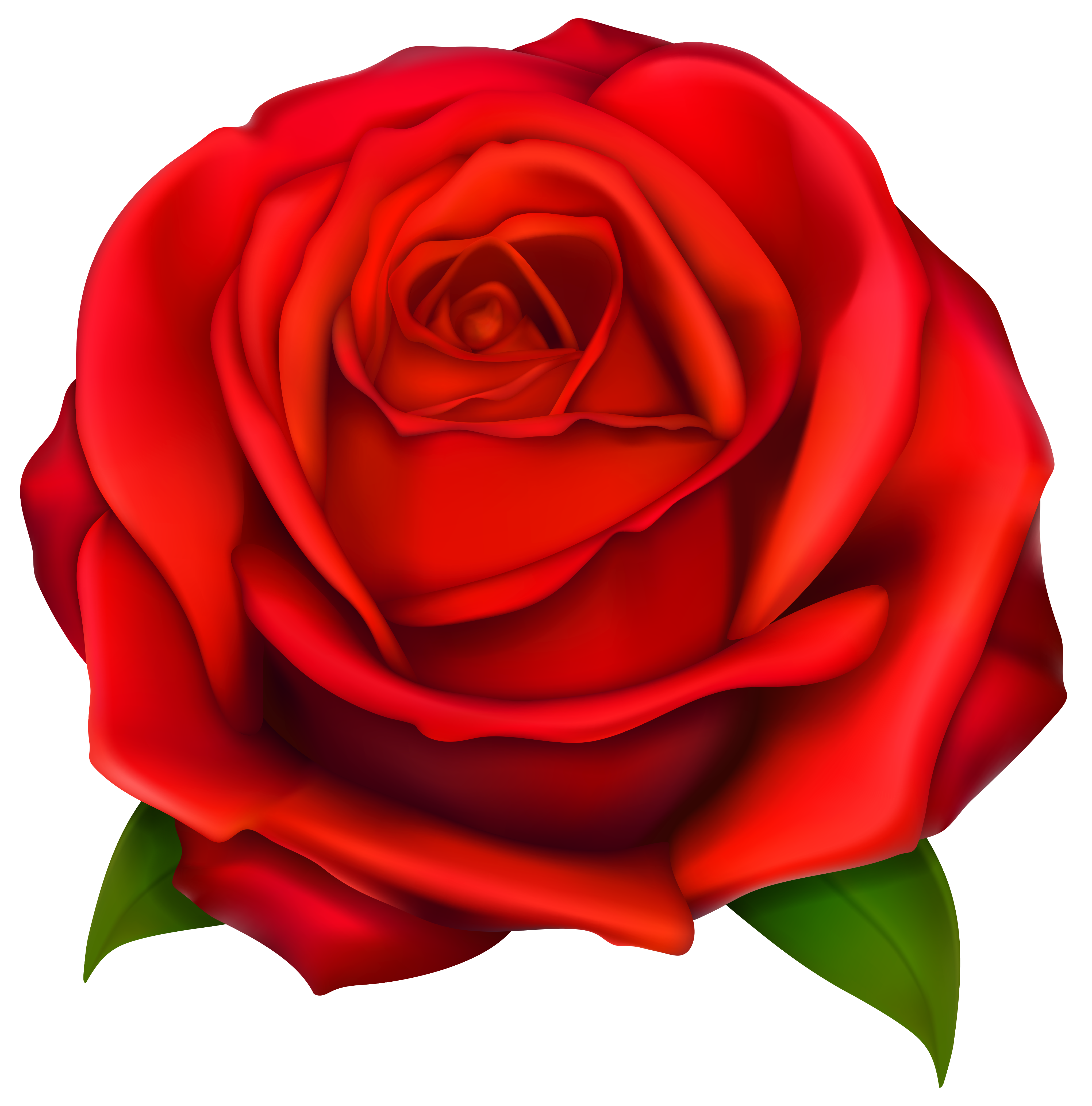 4084x4136 Image Of Clip Art Red Rose 2 Red Roses Clip Art Images Free