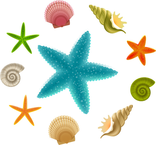 600x560 Starfish clipart seashell