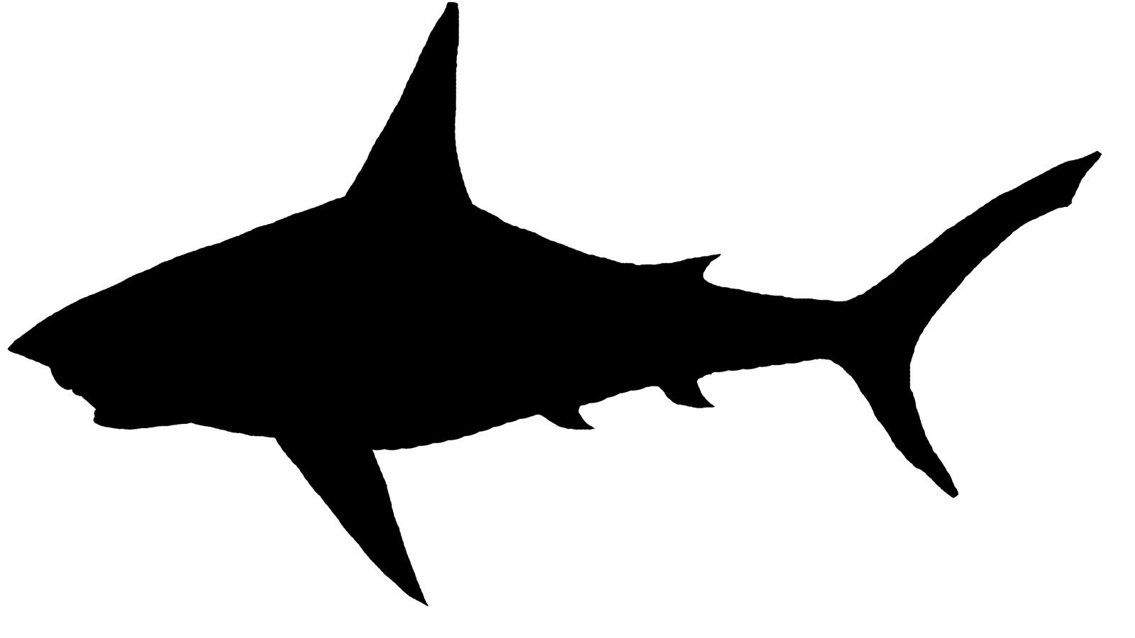 1600x900 Bull Shark Clipart Transparent Background