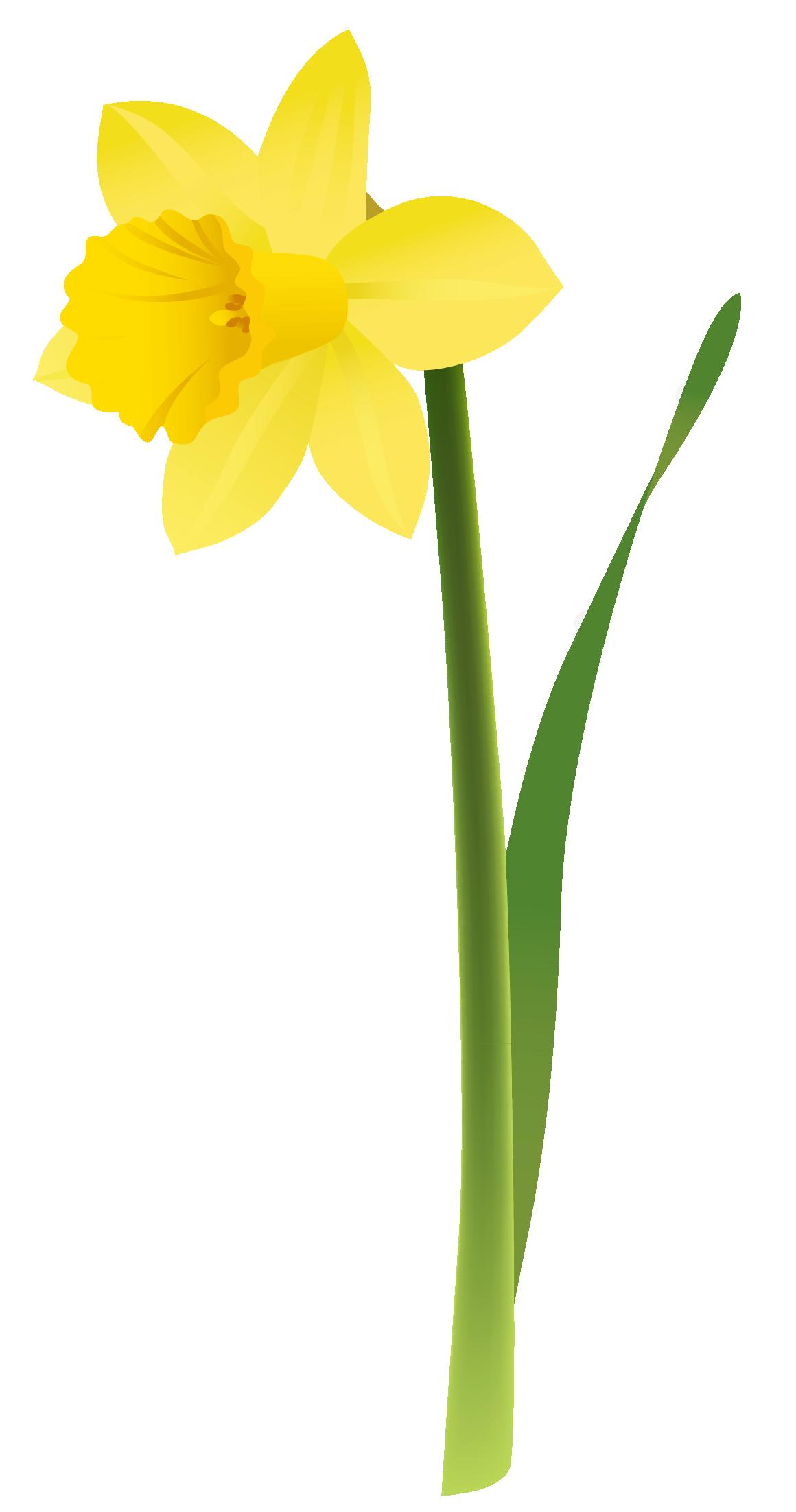 1160x2203 Yellow Daffodils Clipart Gratitude Daffodils, Clip