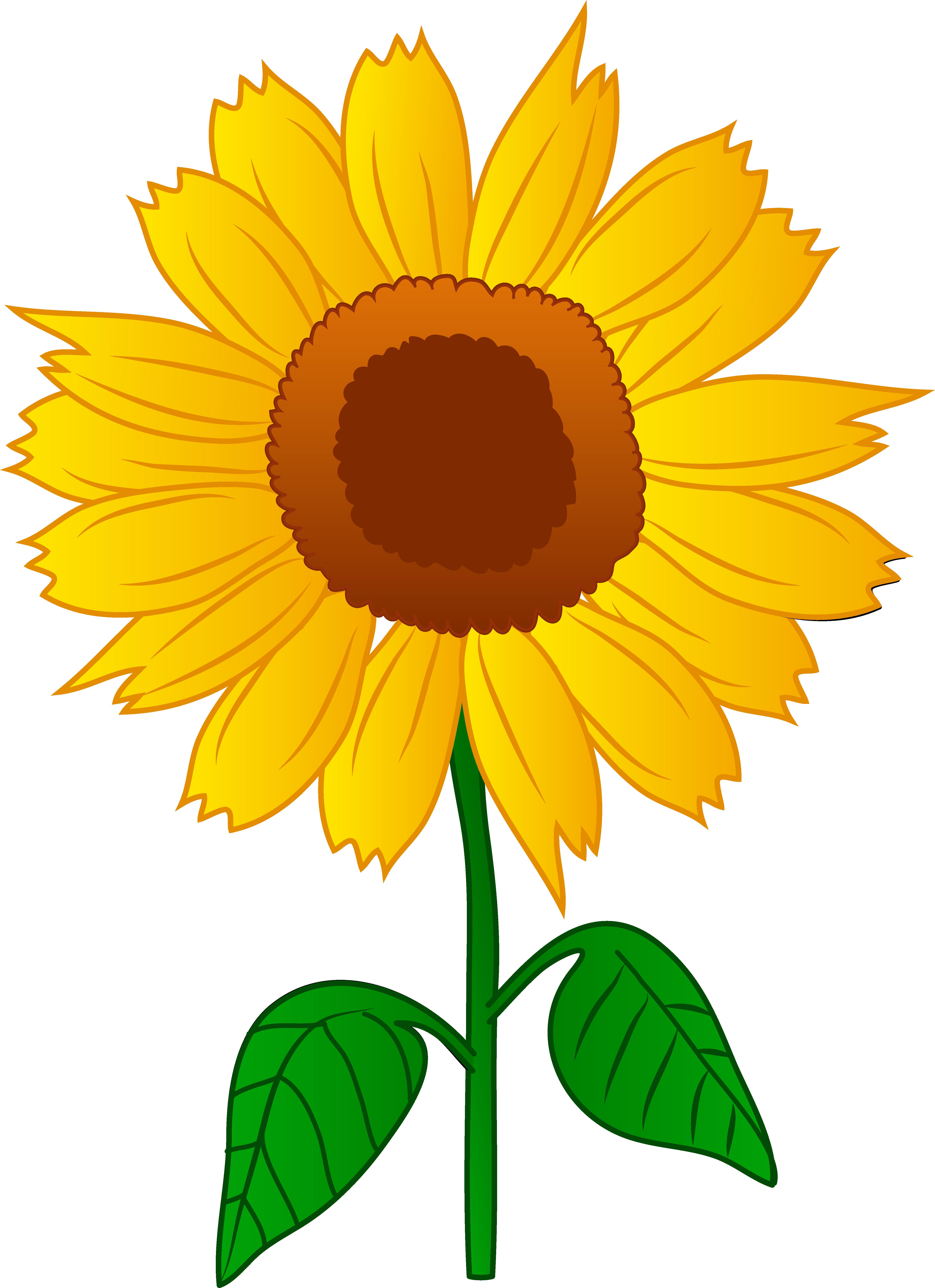 4909x6763 Pretty Golden Sunflower