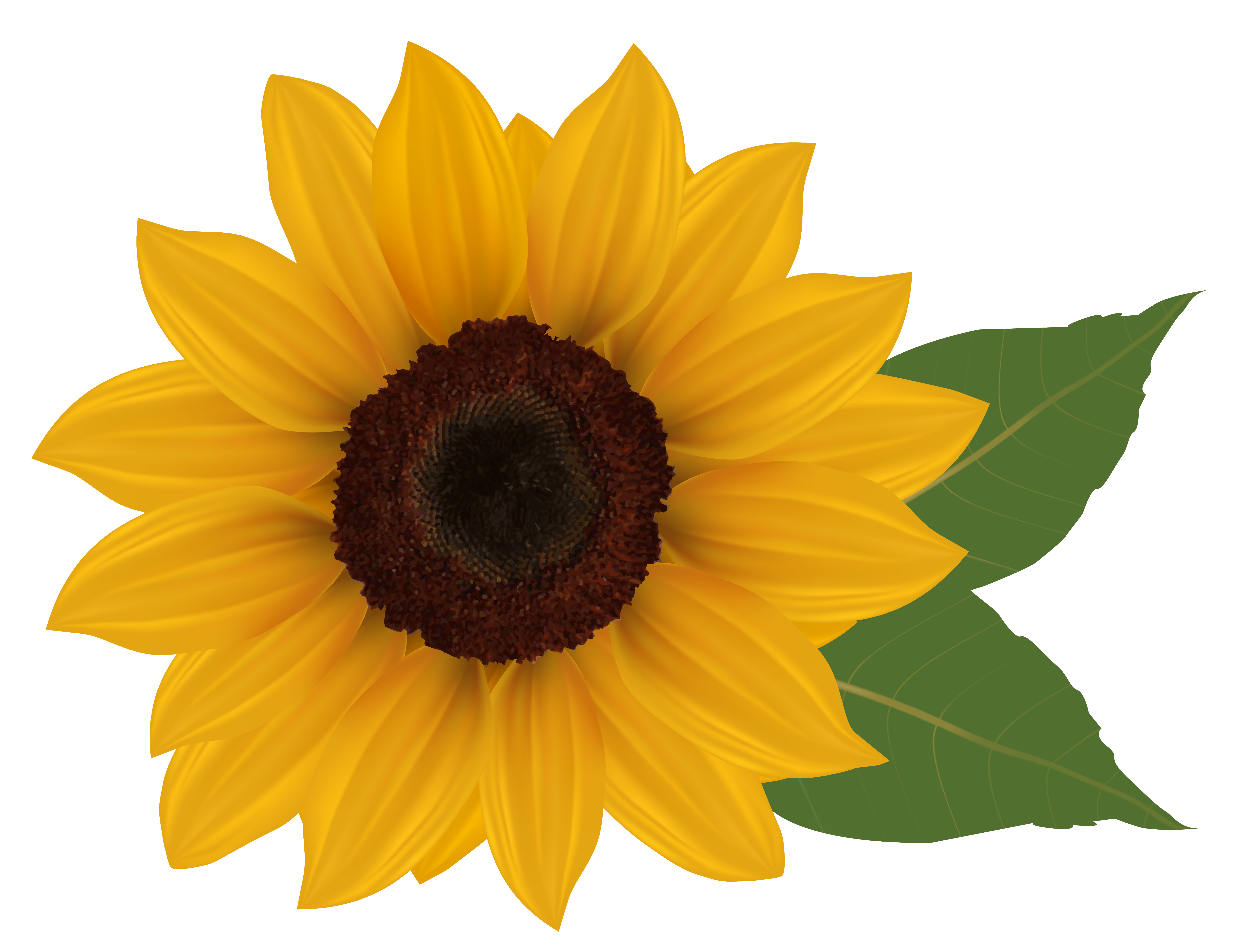 6078x4682 Sunflower Png Clipart Pictureu200b Gallery Yopriceville