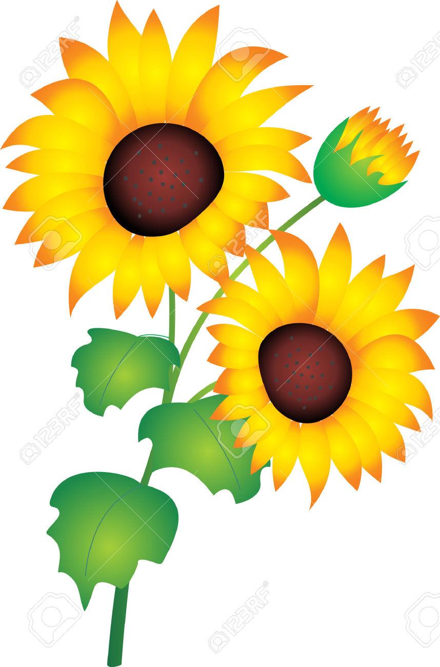 858x1300 Sunflower Clipart Bud
