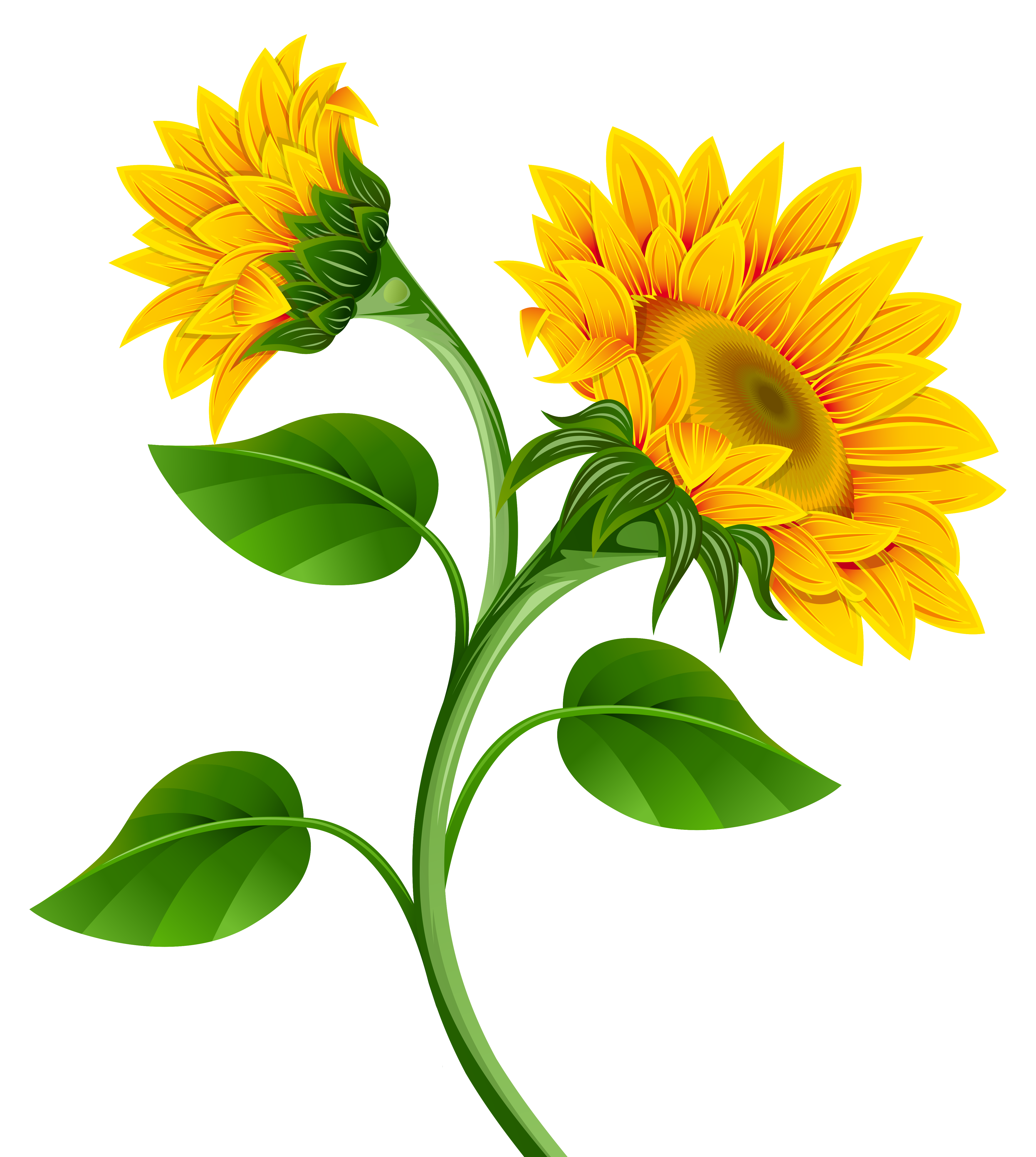 4563x5096 Sunflowers Clipart Image Gallery Yopriceville High