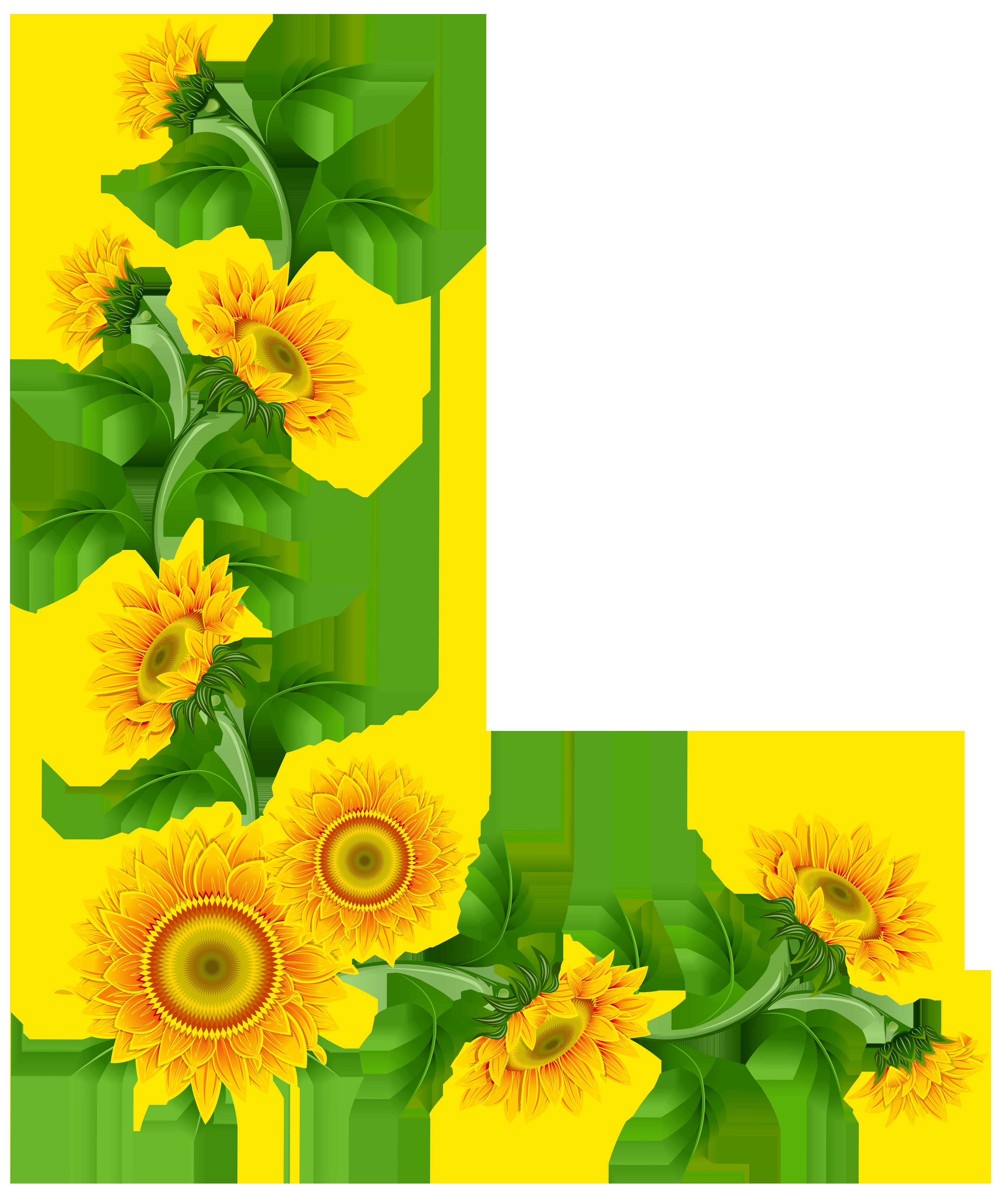 4316x5130 Free Sunflower Border Clipart Image
