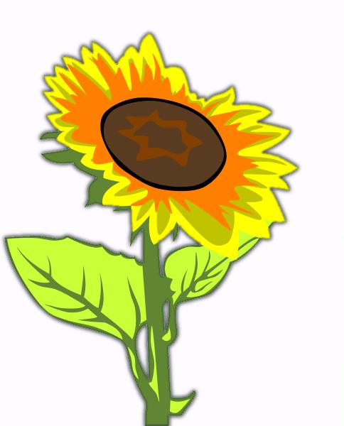 484x600 Free Sunflower Clipart